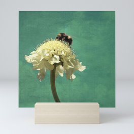 Perfect Scabiosa Mini Art Print