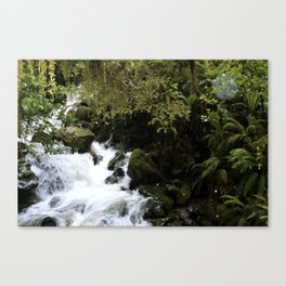 Road to Milford Sound Canvas Print