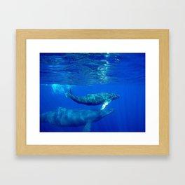 Underwater Humpbacks 7 Framed Art Print