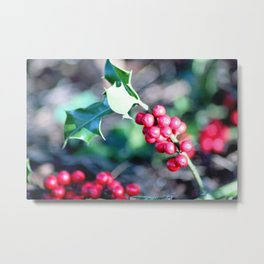 festive Christmas holly Metal Print