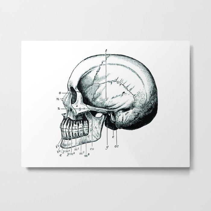 Skull 3 Metal Print