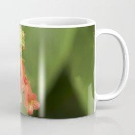 Kohleria from Bud to Bloom Coffee Mug