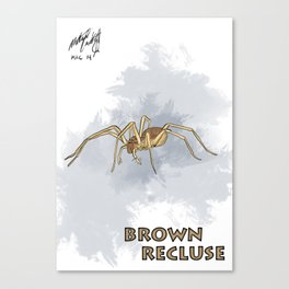 Brown Recluse Canvas Print