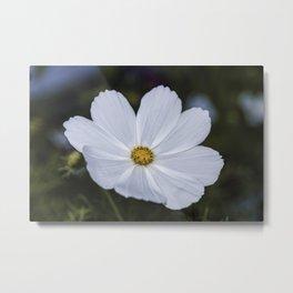 White Cosmos Metal Print