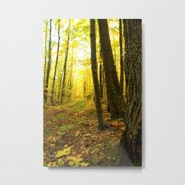 Autumnal Pathway Metal Print