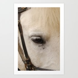 Face of a Horse Art Print