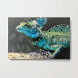 Plumed Basilisk (Male) Metal Print