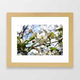 Crabapple FLowers 06 Framed Art Print