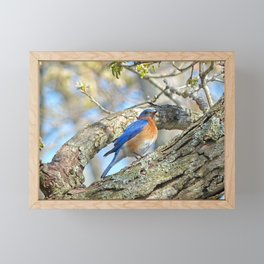 Bluebird in Tree Framed Mini Art Print