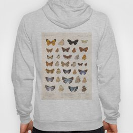 Vintage Scientific Insect Butterfly Moth Biological Hand Drawn Species Art Illustration Hoody