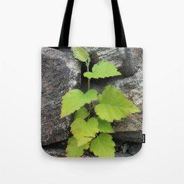 Little plant Tote Bag