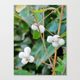 Greenery and Berries Canvas Print