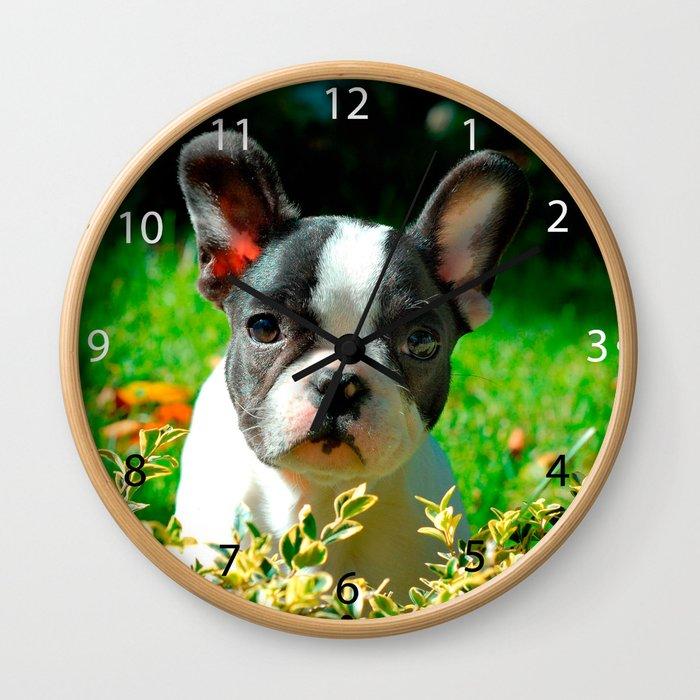 French bulldog puppy behind the foliage Wall Clock