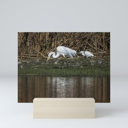 Great and Snowy Egrets, No. 2 Mini Art Print