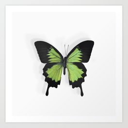 Botanical Bufferfly Green Art Print