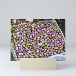 Vietnamese purple small round eggplant stock photo Mini Art Print