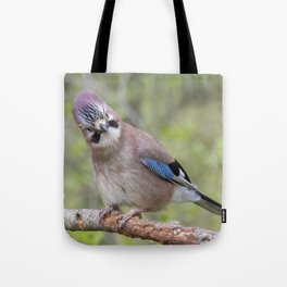 Shy colourful Jay bird Tote Bag