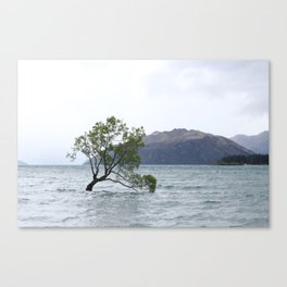 The survival of the fittest Canvas Print