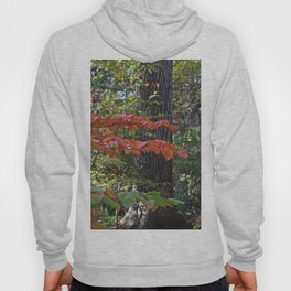 The Divinity of Nature Hoody