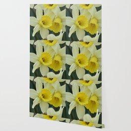 daffodils bloom in spring in the garden Wallpaper
