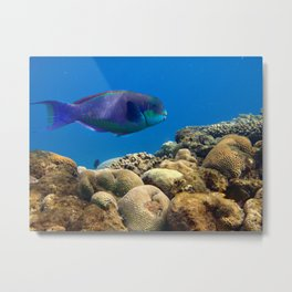 The underwater life Metal Print
