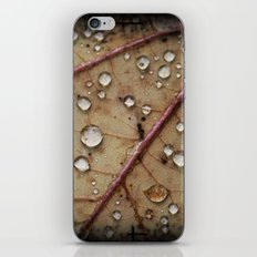 A Close Up Of A Wet Leaf iPhone & iPod Skin