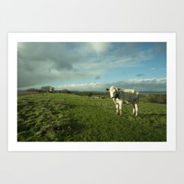 East Somerset Bullock Art Print