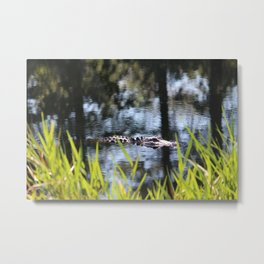 Alligator Moving Along Metal Print
