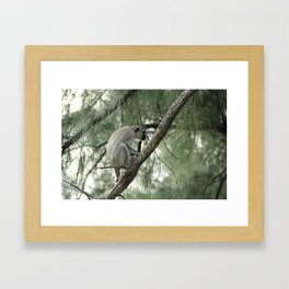 Monkey Itch Framed Art Print