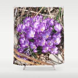 Watercolor Flower, Purple Crocus 01, Washington D.C., Spring Delights! Shower Curtain