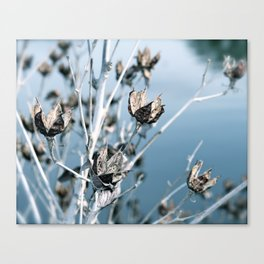 Winter Seed Pods Canvas Print