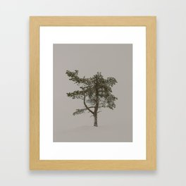 Solo tree - Minimalistic tree in Lapland, Finland against snow Framed Art Print