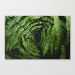 vascular Canvas Print