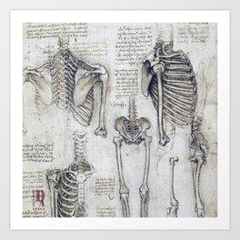 Leonardo Da Vinci human body sketches Art Print