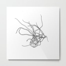 Tillandsia Bulbosa. Airplant Metal Print