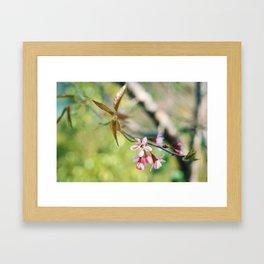 WILD CHERRY Framed Art Print