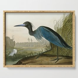 Little Blue Heron - John James Audubon's Birds of America Print Serving Tray