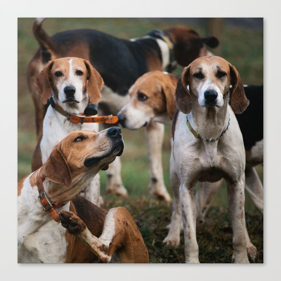 Foxhounds Canvas Print