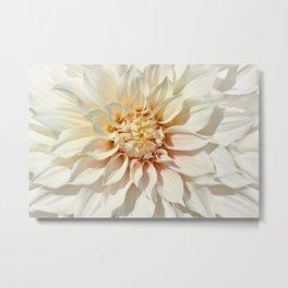 Dahlia white macro 043 Metal Print