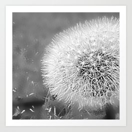 Balck and White Dandelion Puffball 2bw Art Print