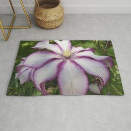 Clematis - Stunning two-tone flowers Rug