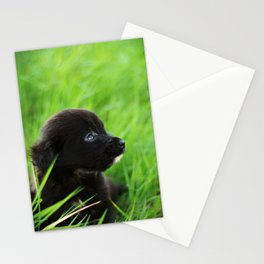 Shelter Puppy Stationery Cards
