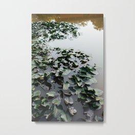 Water Lilies II Metal Print