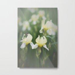 Yellow Iris Flowers in Green Field Metal Print