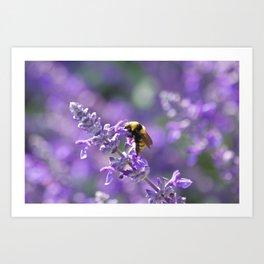 Bee & Purple Flower Art Print