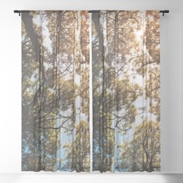 Trees and sky in sunlight- forest landscape - nature photography Sheer Curtain