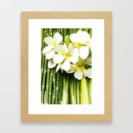 Frangipani of Bali Framed Art Print