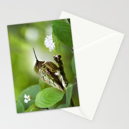 Hummingbird Sitting Stationery Cards
