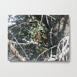 Squirrel in Tree Metal Print