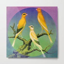 3 Canaries Metal Print
